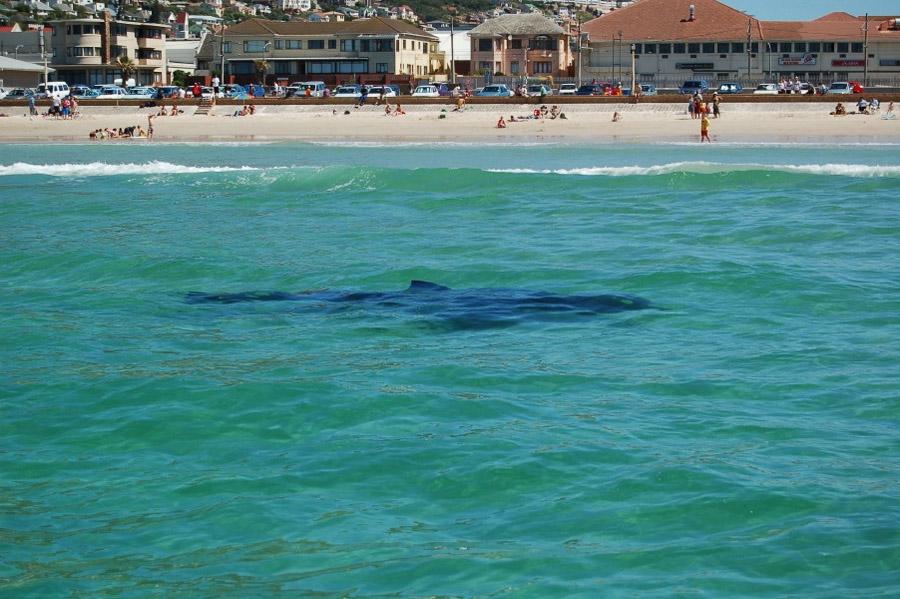 Fishhoek shark_Sharkshield